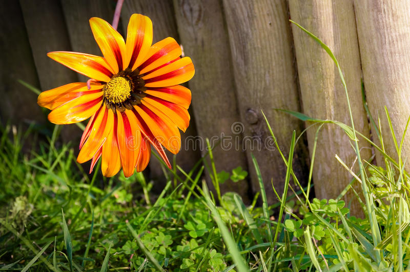 Flower on fence stock images