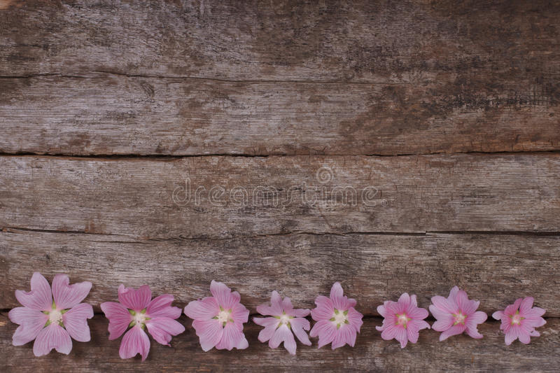 Flower festive frame of pink mallow flowers royalty free stock images