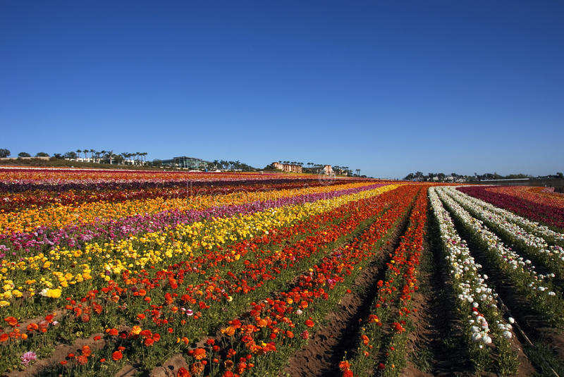 Flower field stock photography
