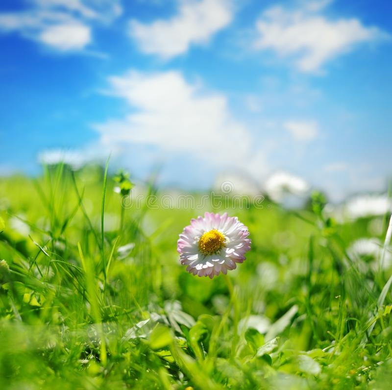 Free Flower Field Royalty Free Stock Image - 14511716