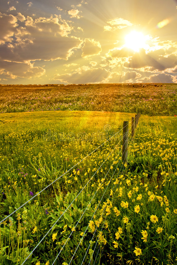 Free Flower, Field, Fence Stock Photography - 6299932