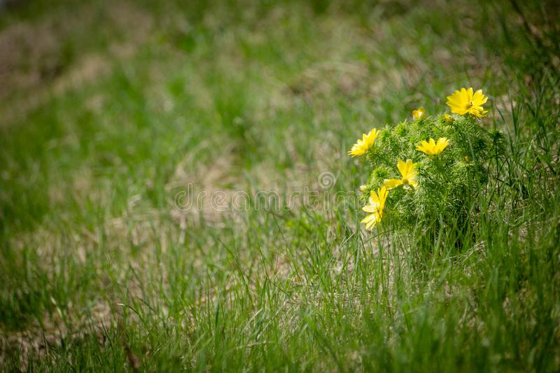 Flower in the field royalty free stock images