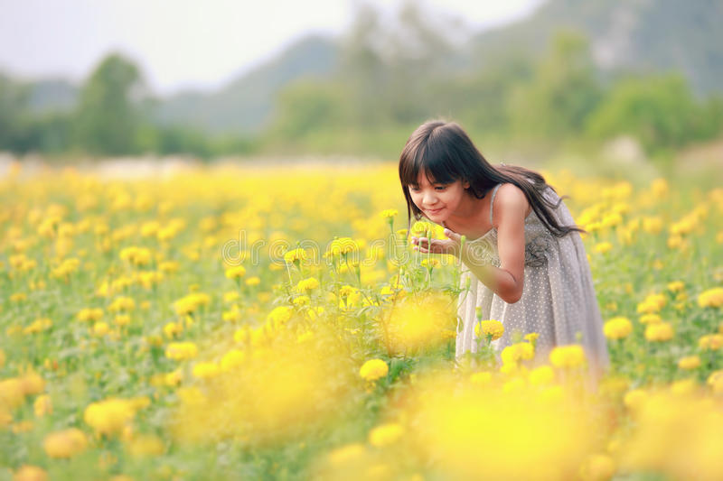 Flower field. Smiling pretty little girl looks out of the yellow flowers on the field stock images