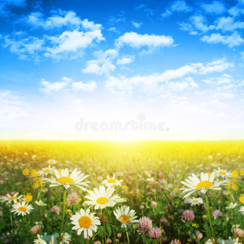 Flower field on summer day. stock images