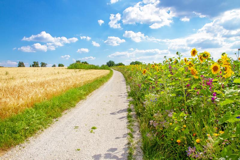 Flower field in summer. Natural field with various flowersin summer royalty free stock photos
