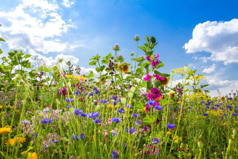 Flower field in summer. Natural field with various flowersin summer stock photos