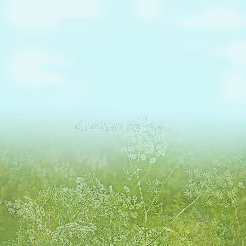 Download Flower Field Under A Light Blue Sky Background Stock Photos - Image: 23375203