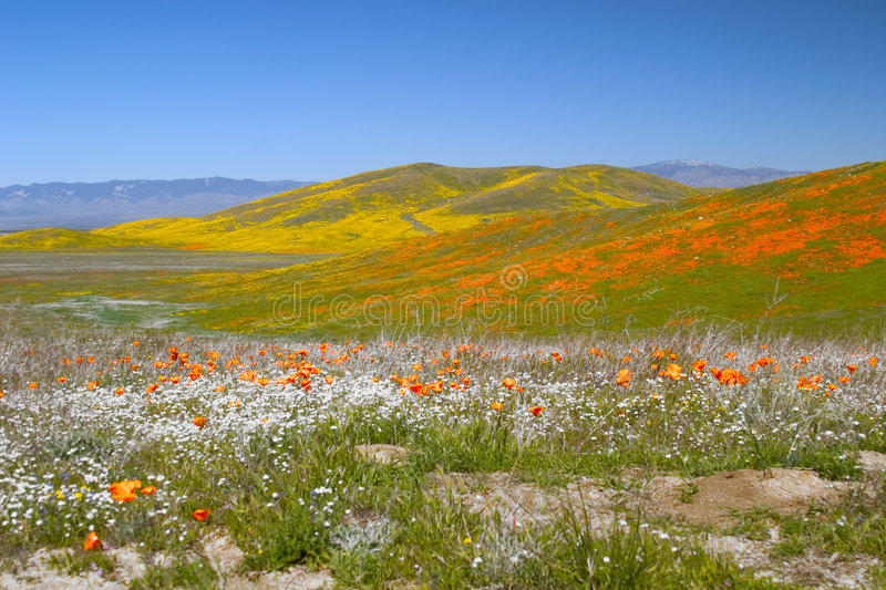 Flower Fields royalty free stock photography