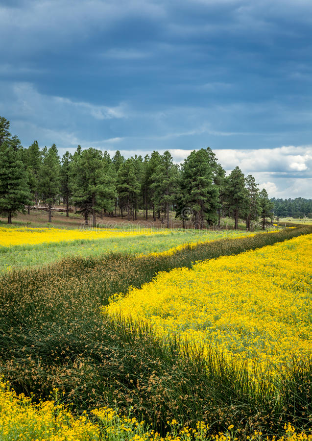 Flower Filled Meadow. Amazing landscape with flower, trees and other plants royalty free stock images