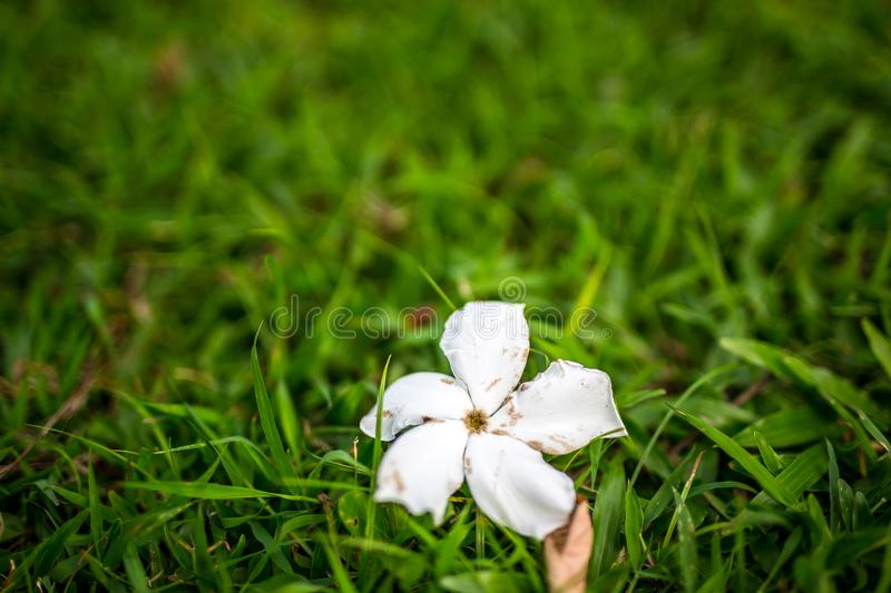 Flower on the floor royalty free stock photography