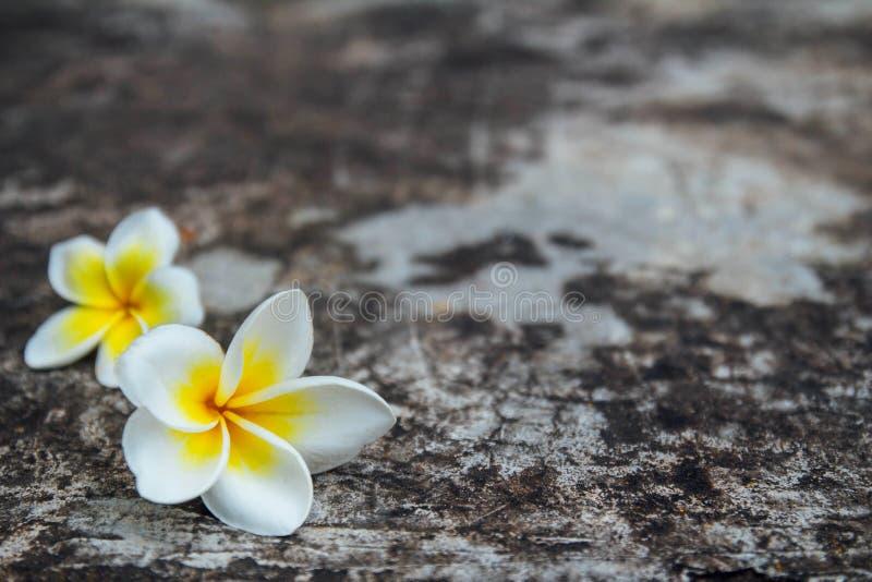 Flower on floor. White Flower on cement floor royalty free stock photo