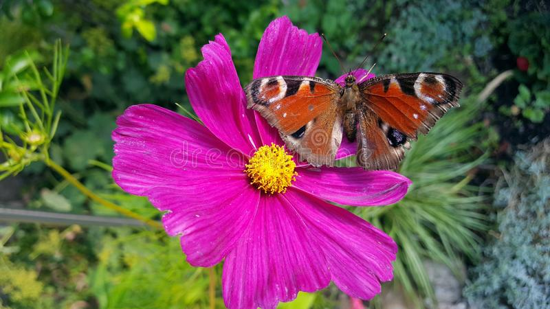 Flower, Flora, Butterfly, Nectar stock photos