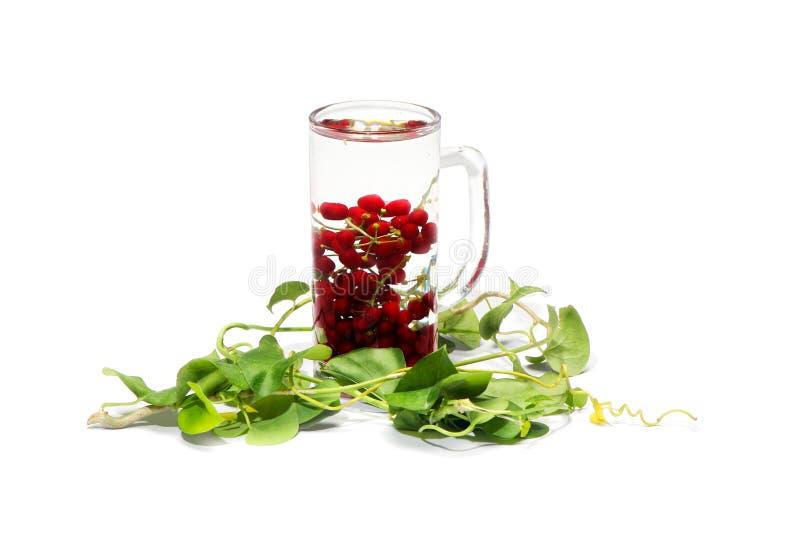 Flower, Flora, Flowerpot, Cup stock images
