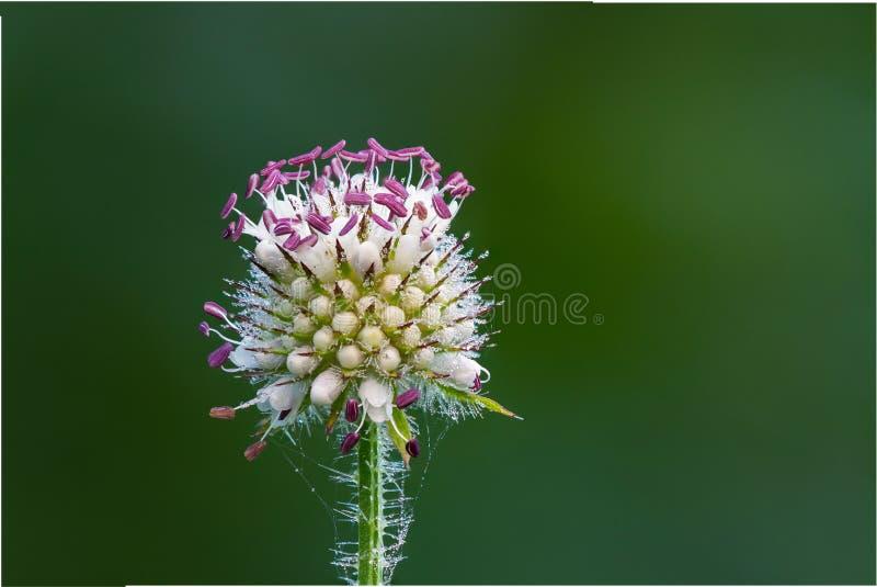 Flower, Flora, Plant, Close Up Free Public Domain Cc0 Image