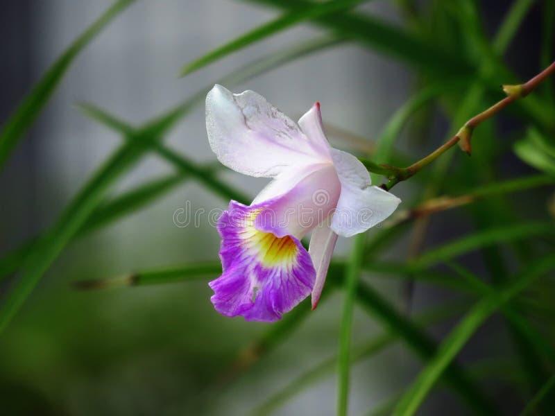 Flower, Flora, Plant, Flowering Plant Free Public Domain Cc0 Image