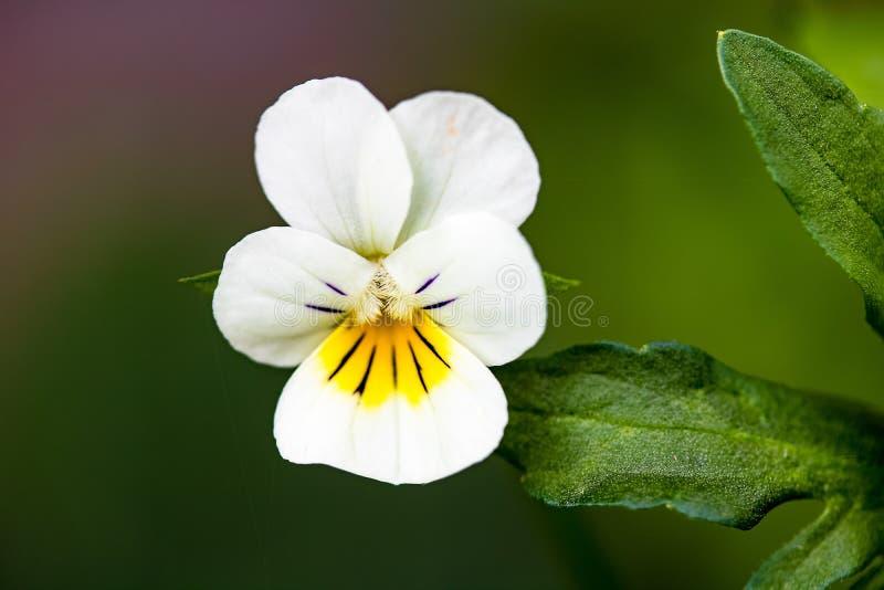 Flower, Flora, Plant, Flowering Plant stock photos