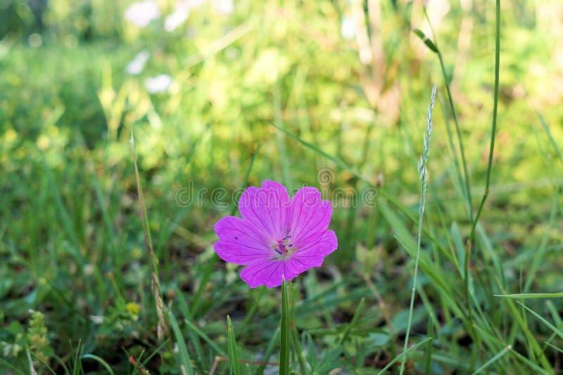 Flower, Flora, Plant, Meadow Free Public Domain Cc0 Image