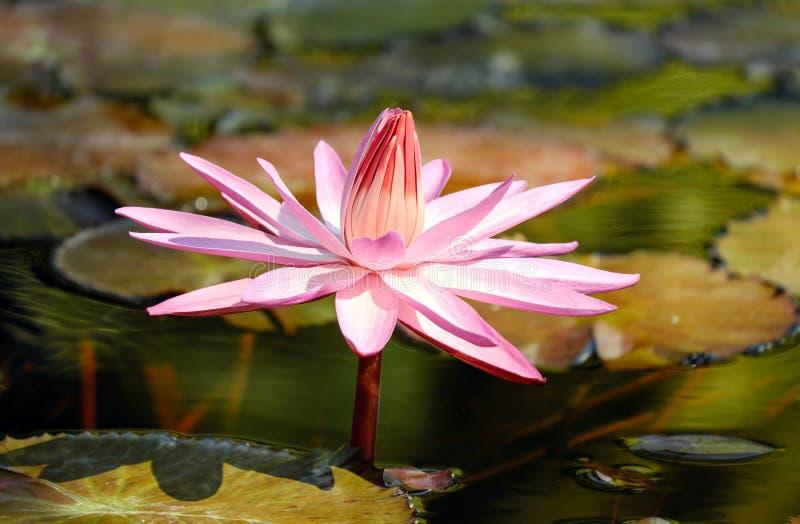 Flower, Flora, Plant, Pink Free Public Domain Cc0 Image