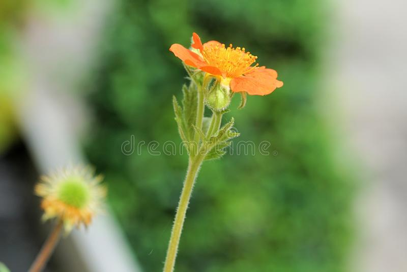 Flower, Flora, Plant Stem, Wildflower Free Public Domain Cc0 Image