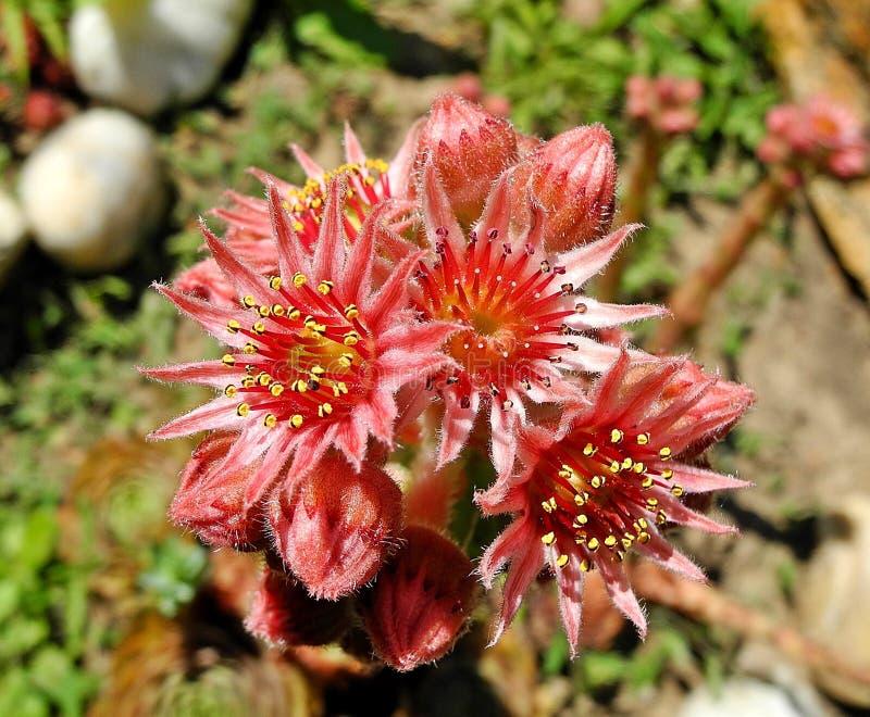 Flower, Flora, Plant, Subshrub Free Public Domain Cc0 Image