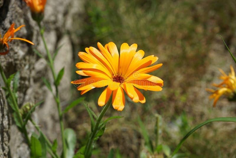 Flower, Flora, Plant, Wildflower Free Public Domain Cc0 Image