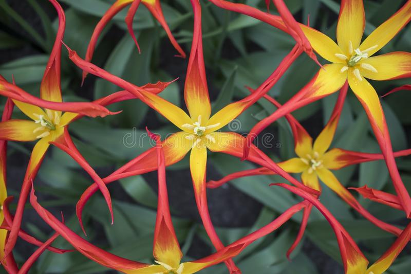 Flower, Flora, Plant, Yellow Free Public Domain Cc0 Image