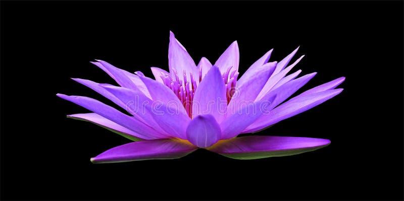 Flower, Flora, Purple, Violet stock images