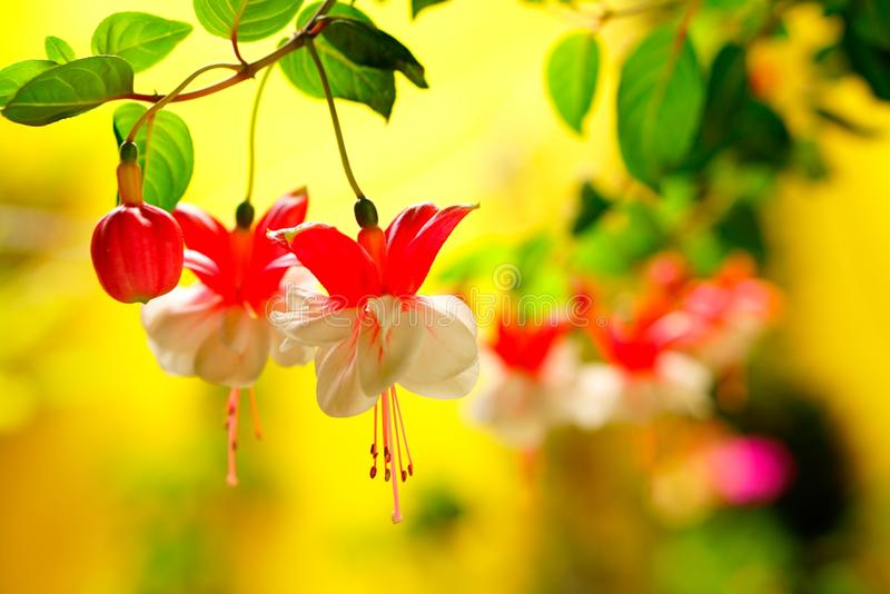 Flower, Flora, Red, Yellow stock photo