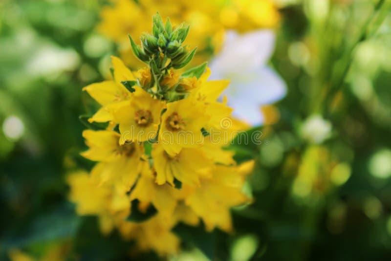 Flower, Flora, Subshrub, Mustard Plant Free Public Domain Cc0 Image