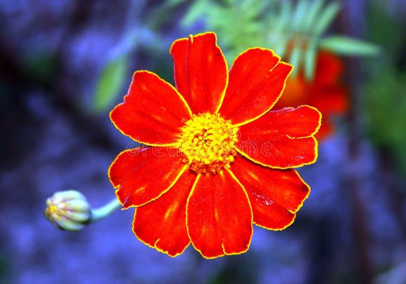 Flower, Flora, Wildflower, Petal Free Public Domain Cc0 Image