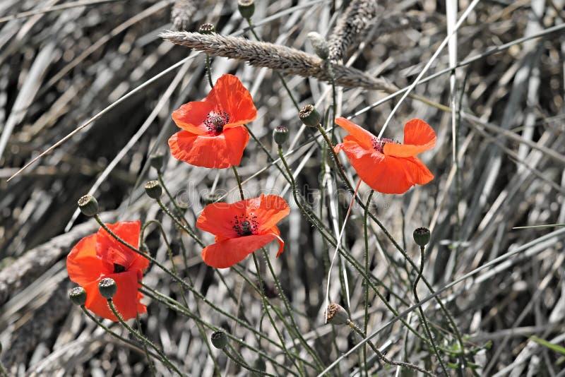 Flower, Flora, Wildflower, Plant Free Public Domain Cc0 Image