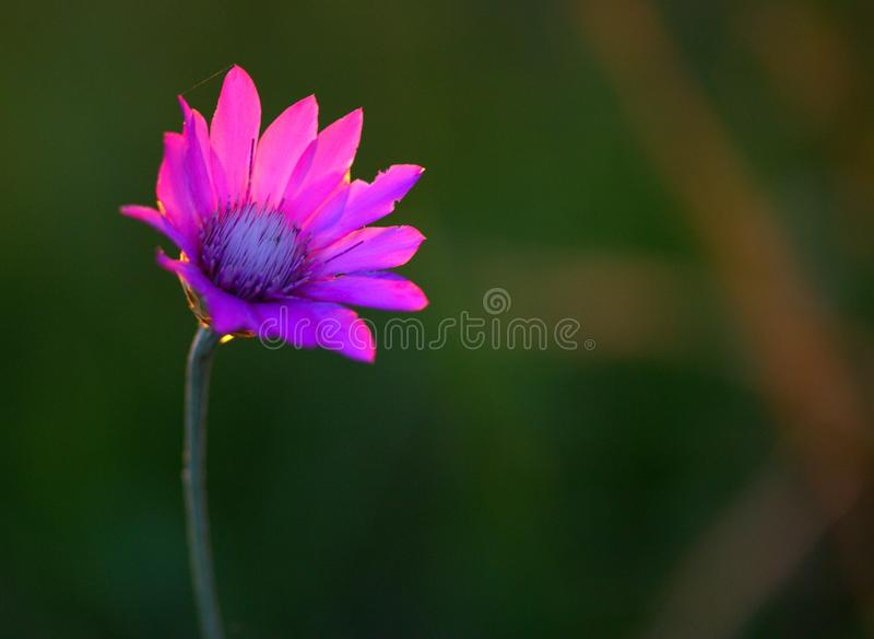Flower, Flora, Wildflower, Purple Free Public Domain Cc0 Image