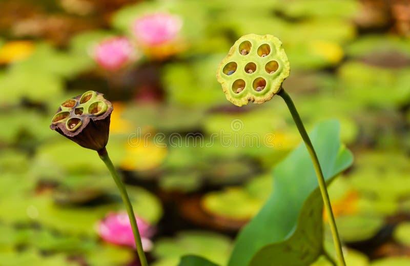 Flower, Flora, Yellow, Plant stock photos