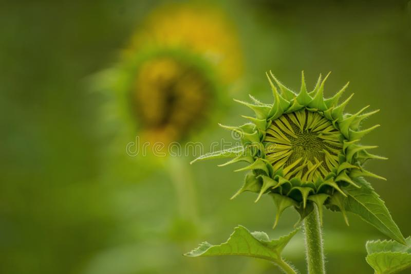 Flower. Nature, natural, photography, beaty royalty free stock photography