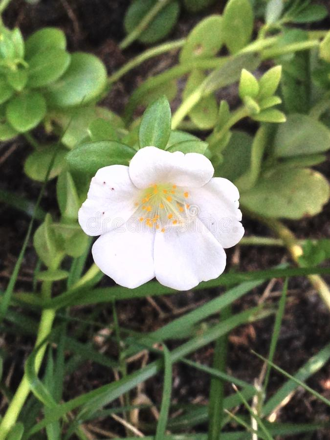 Flower. Natureza garden and Wonders of nature royalty free stock photos