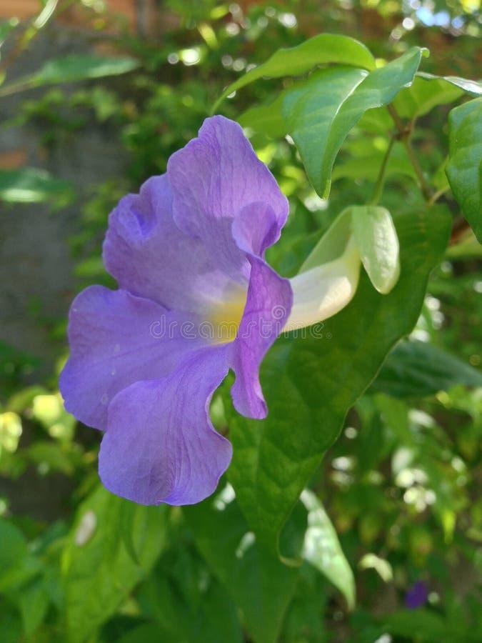 Flower. Natureza garden and Wonders of nature stock photos