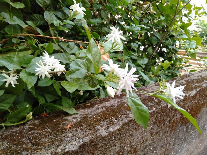 Flower. White white nature beautiful royalty free stock photography