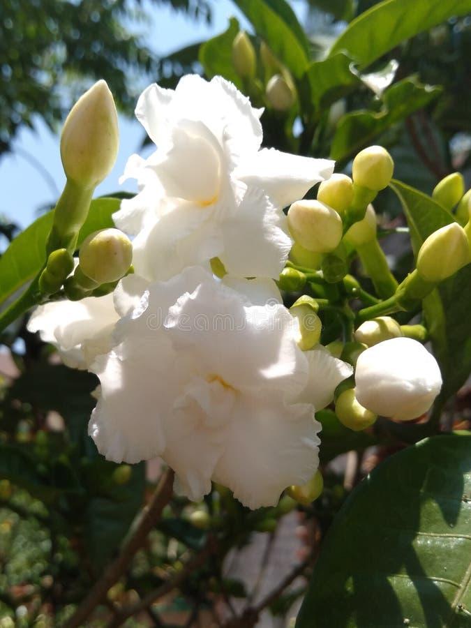 Flower. White nature beautiful cream stock photography