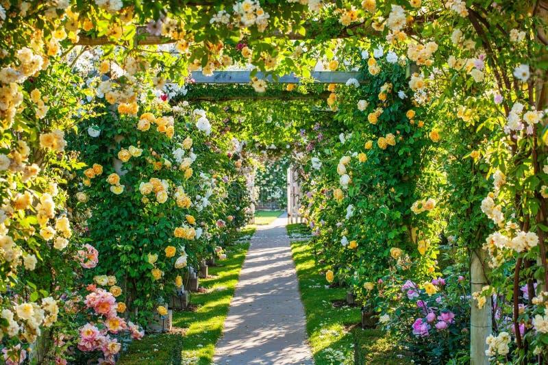 Flower, Flowering Plant, Garden, Plant stock image