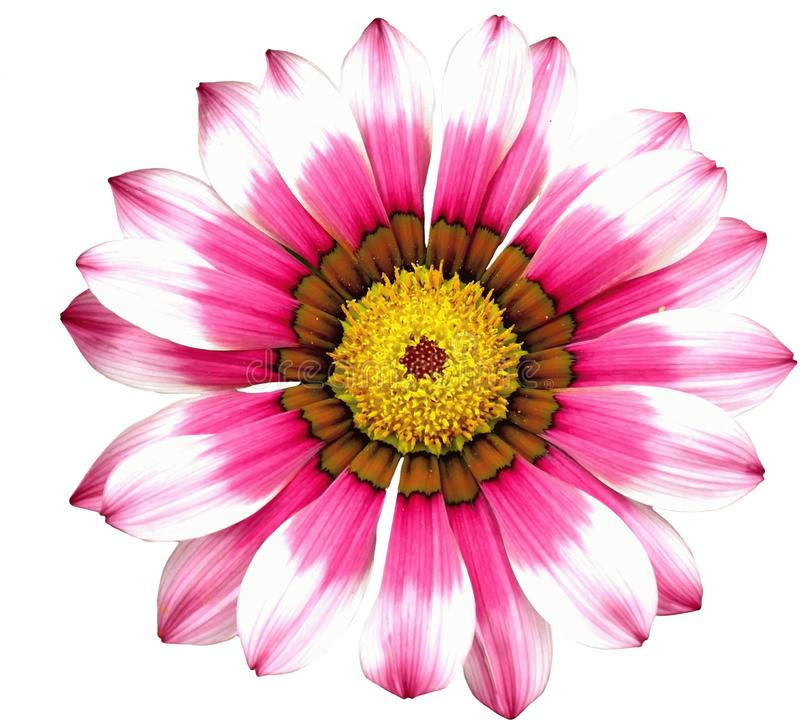 Flower, Flowering Plant, Pink, Petal stock photography