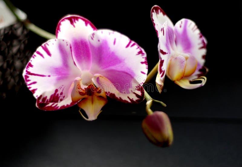 Flower, Flowering Plant, Plant, Pink Free Public Domain Cc0 Image