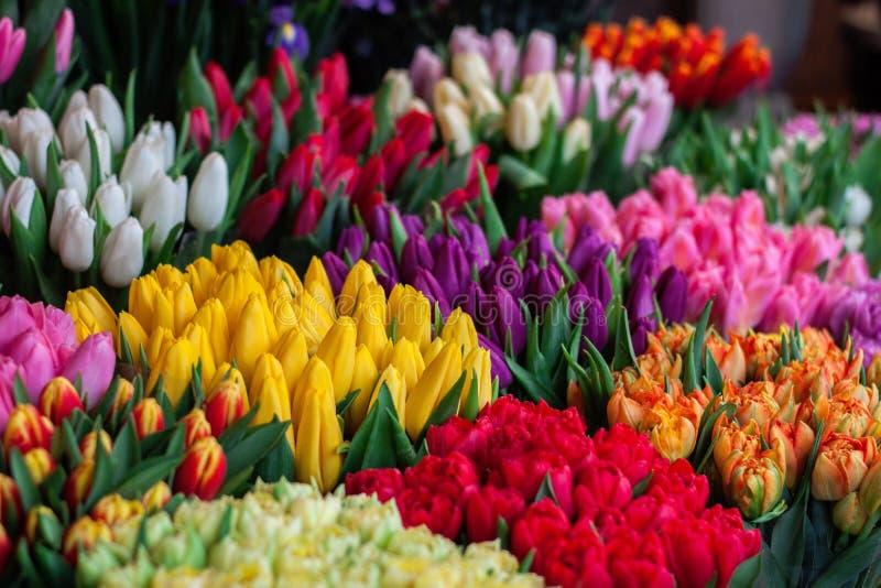 Flower, Flowering Plant, Plant, Tulip Free Public Domain Cc0 Image