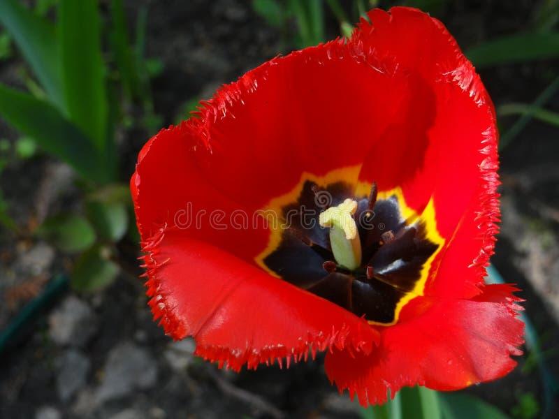 Flower, Flowering Plant, Plant, Wildflower Free Public Domain Cc0 Image