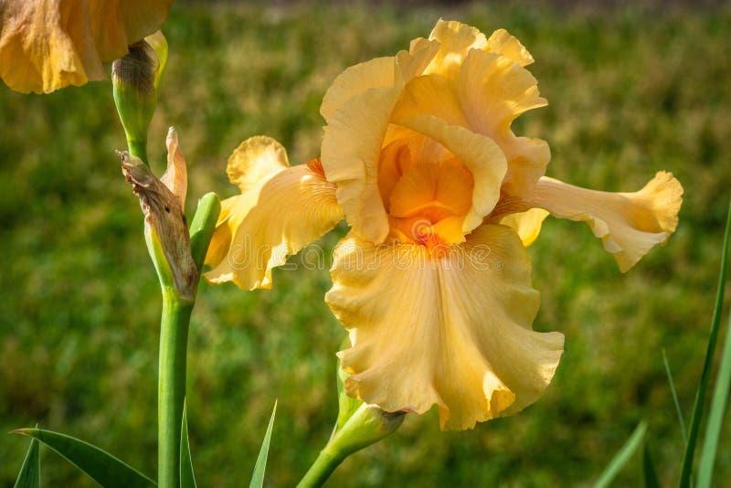 Flower, Flowering Plant, Plant, Yellow Free Public Domain Cc0 Image