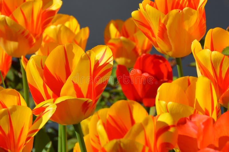 Flower, Flowering Plant, Yellow, Plant stock photo