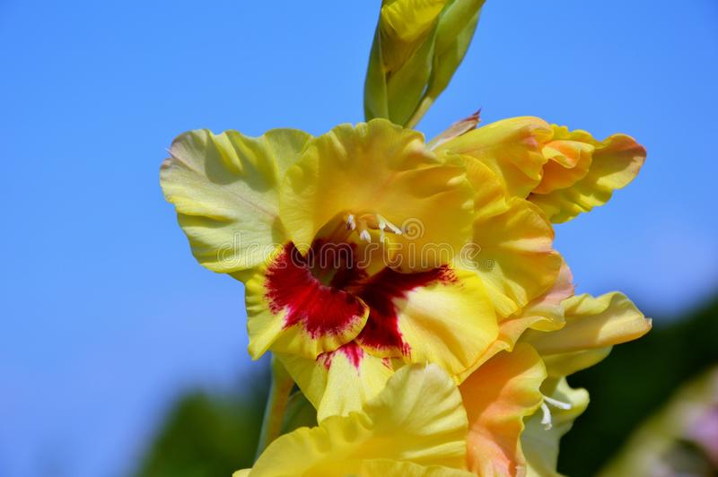 Flower, Flowering Plant, Yellow, Plant Free Public Domain Cc0 Image