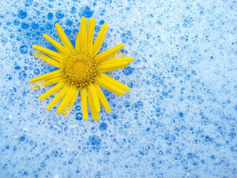 Flower in foam royalty free stock photography