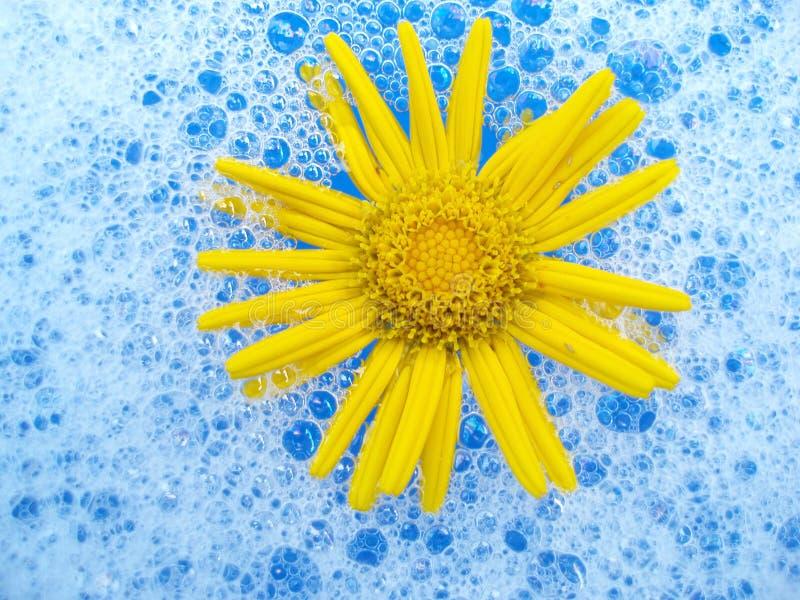 Flower in foam royalty free stock photos