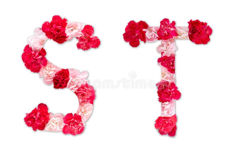Flower font alphabet S T set collection A-Z, made from real Carnation flowers pink, red with paper cut shape of capital letter royalty free stock photo
