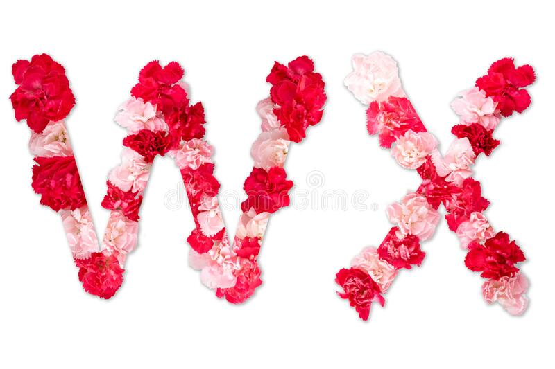 Flower font alphabet W X set collection A-Z, made from real Carnation flowers pink, red with paper cut shape of capital letter stock images